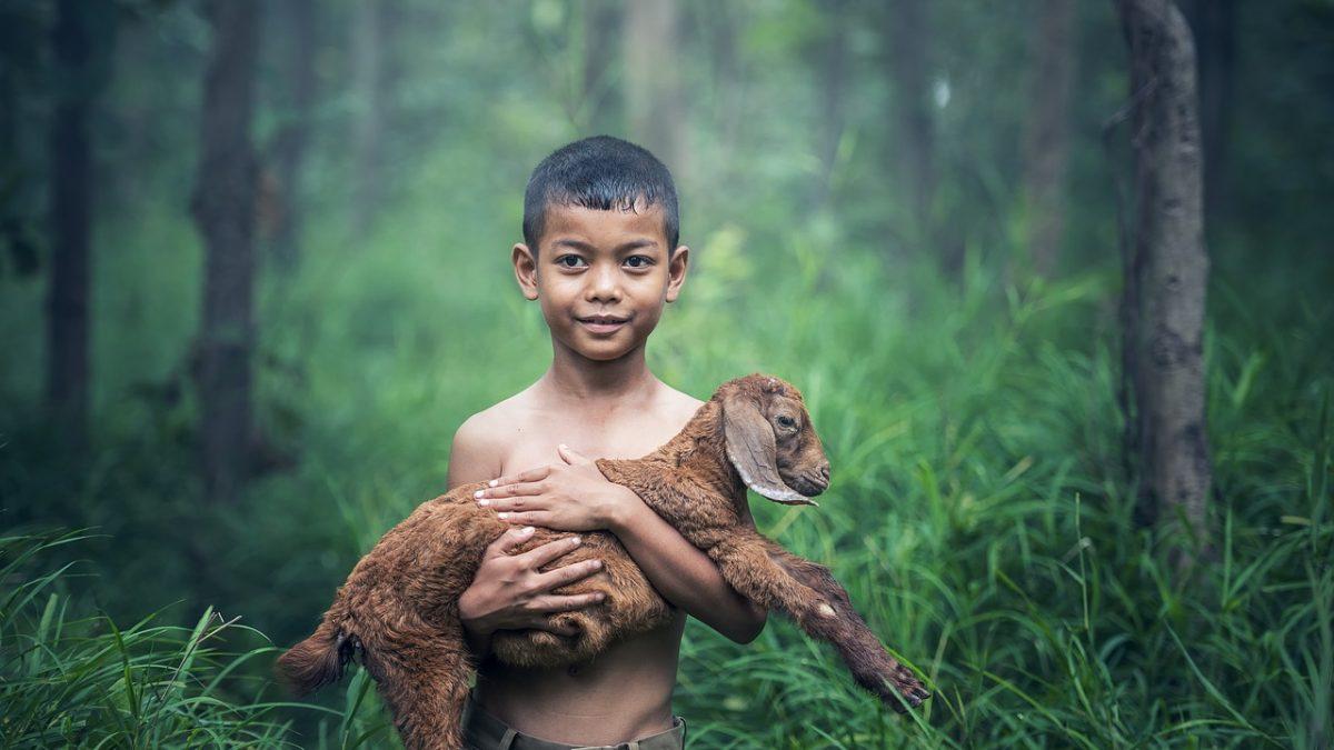 Çocuklar ve Hayvanlar
