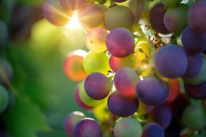 İyi Şarap, İyi İnsan Gibidir