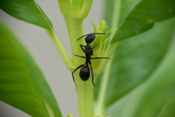 Karıncalar, Serçeler ve İnsanlar...