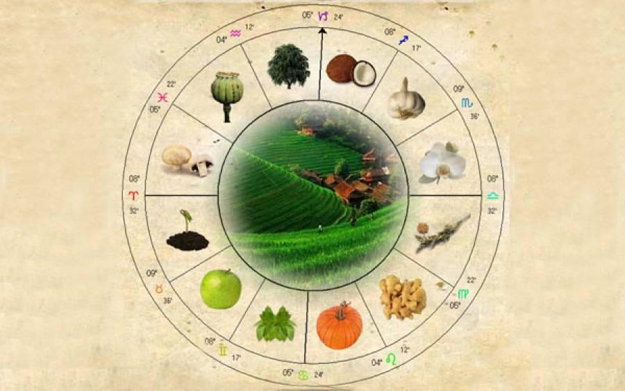 Astroloji'de Bitki Şifacılığı