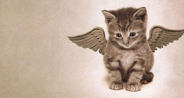 Ya Kedimiz Ölürse…