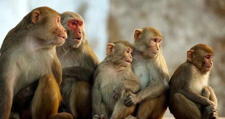 100 Maymun Fenomeni Gerçek mi?