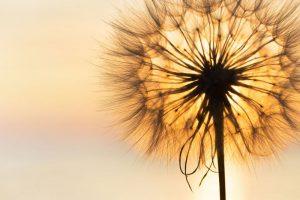 Doğru Niyetlerle Yapılan, Bütün İbadetlere Saygı Duymakta Buluşalım