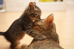 Herkes Kendisinin Hem Annesi, Hem de Çocuğu Olsun...
