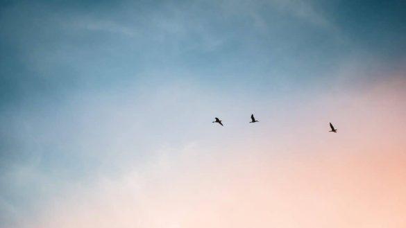Olanı Olduğu Gibi Gören, Berrak Bir Zihin Geliştirmek İçin 4 Öneri