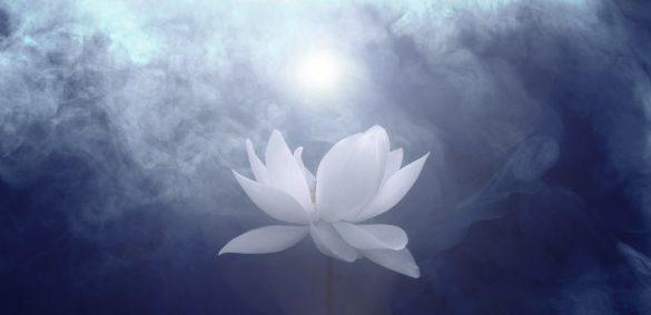 Beyaz Lotus Yolu Üzerine...