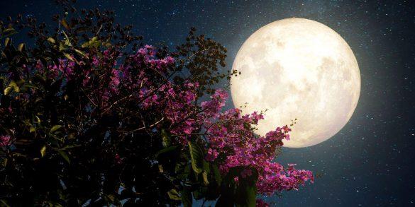 28 mart terazi burcunda dolunay
